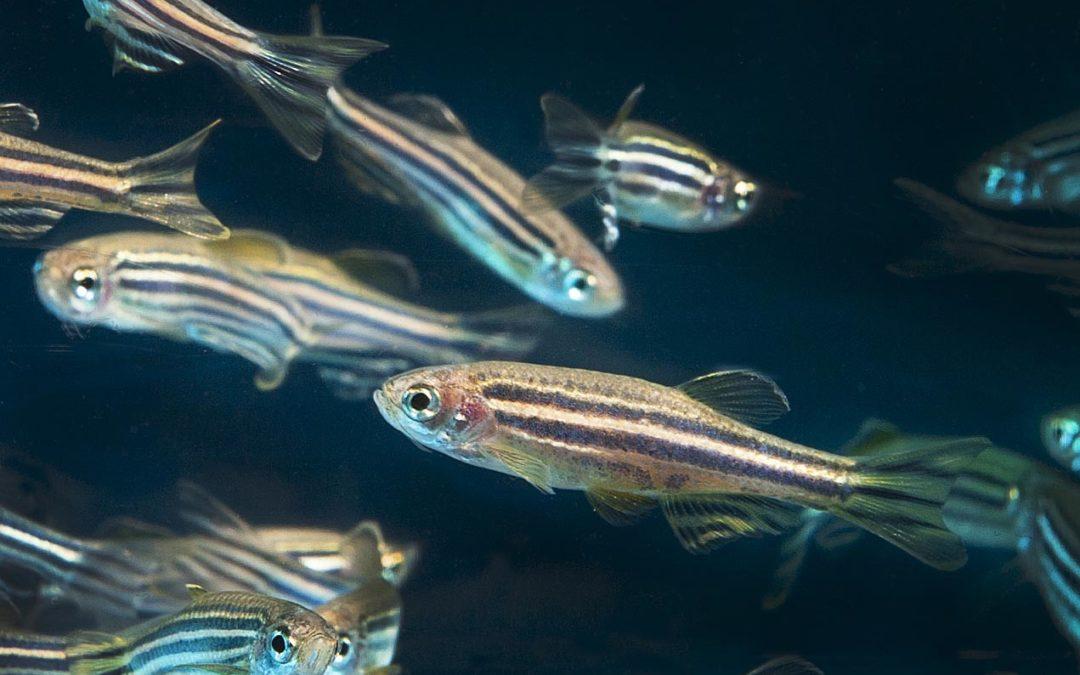 Toxicologia i comportament de les espècies aquàtiques