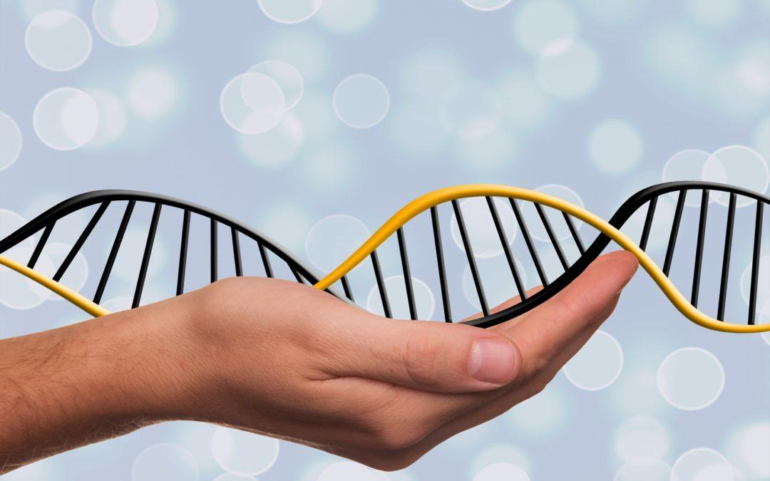 Adapta't: la nostra història evolutiva llegida en el genoma