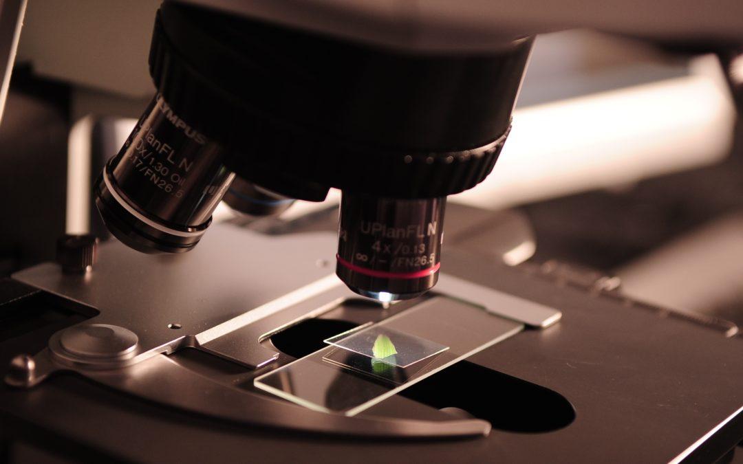 Fer visible l'invisible: transparentació de mostres i microscòpia