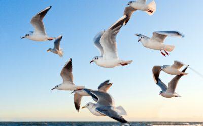 Distribució de contaminants a vista d'ocell