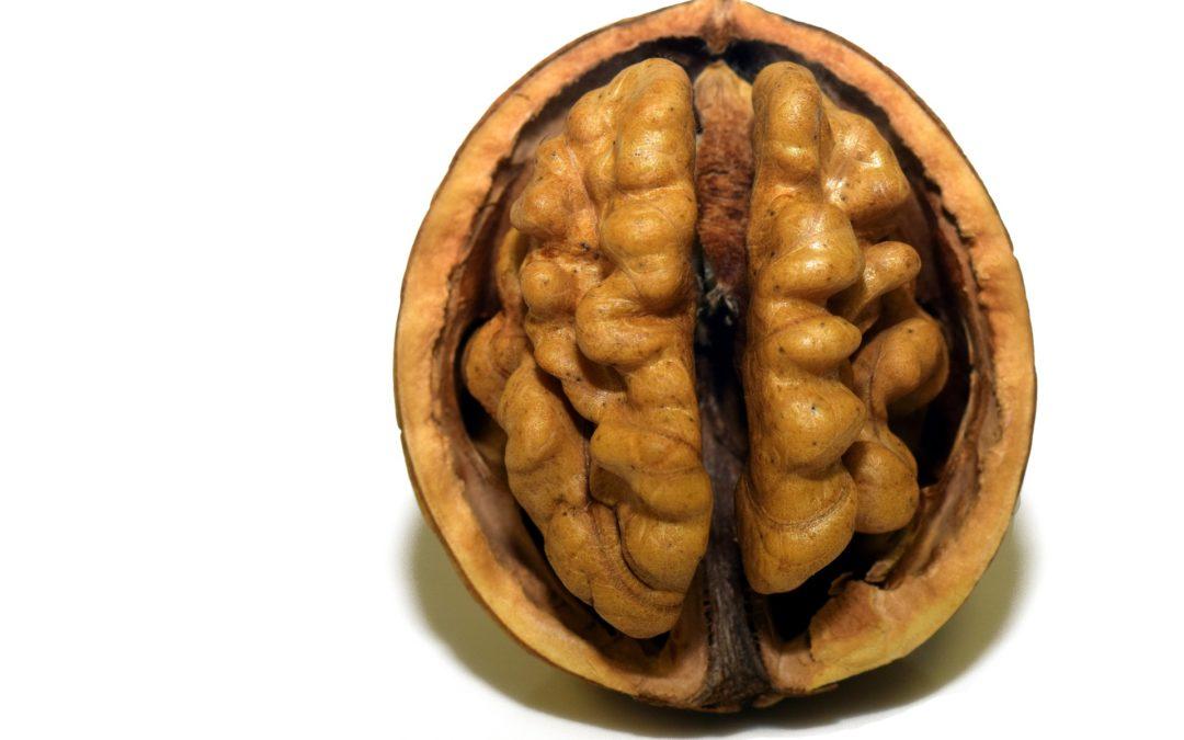 Prevenció en salut mental: posa en forma el teu cervell!