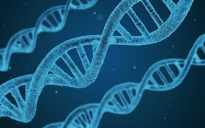 Microxerrades: Genètica i Biologia Mol·lecular