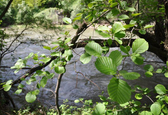 El bosc del riu