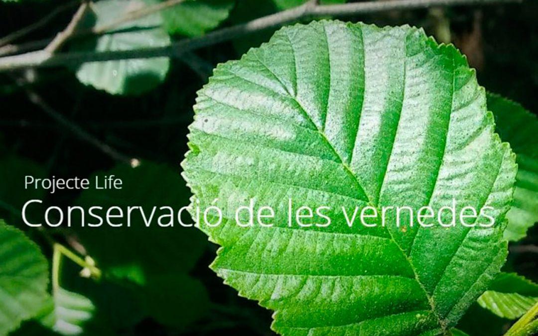 Com tenim els boscos de ribera a Catalunya? Recerca aplicada a la conservació de les vernedes