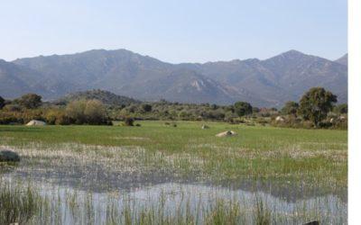 Basses temporànies mediterrànies, refugis de biodiversitat