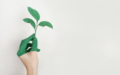 Serveix l'activisme creatiu per defensar a les comunitats en risc de degració ambiental?
