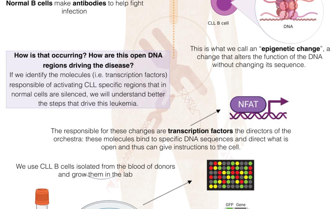 Role of Transcription Factors as drivers of chronic lymphocytic leukemia