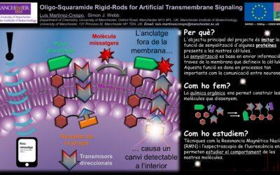 Oligo-Squaramide Rigid-Rods for Artificial Transmembrane Signaling
